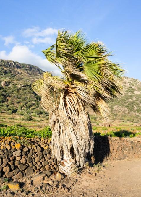 Pantelleria_T_34
